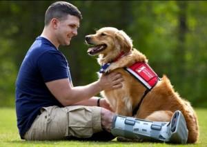 veteran-chien-therapie